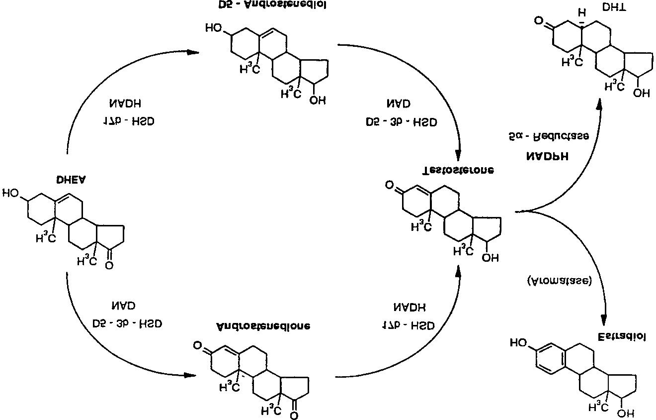 17b-hydroxysteroid